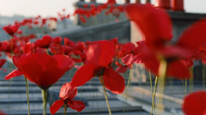 kenzo-flower-article4